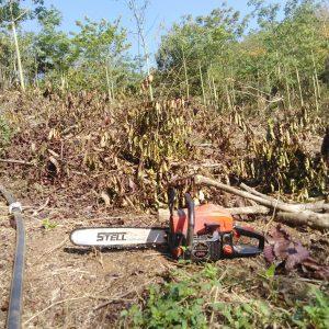 Cư M'gar: Giá cà phê chạm đáy, nông dân bỏ vườn , phá cà phê